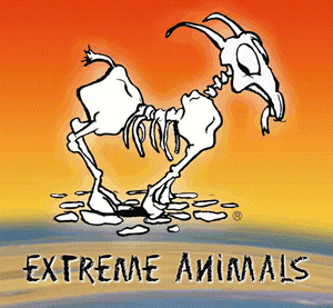 Shopping Fuerteventura: Surf & Beachwear - Extreme Animals - Fuerteventura.